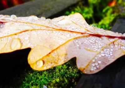 15.21-St-Pancras-Chapel_leaf-dew