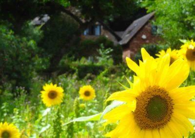 15.31_St-Pancras-Chapel_sunflowers